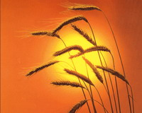 http://kolomyya.org/images/2008/2734.jpg